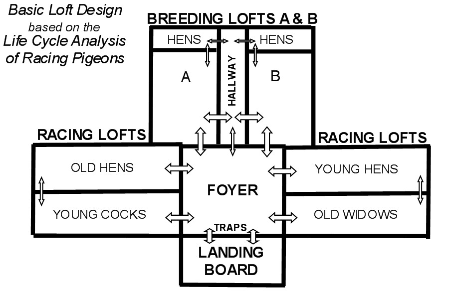 Loft Construction And Design Winning Pigeon Racing And Racing
